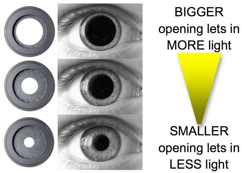 The size of the hole of the diaphragm controls how much light comes into the camera just like the size of your pupil in your eye.